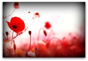 remembrance-day1